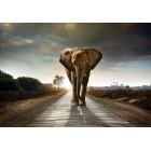 Φωτοταπετσαρία Ελέφαντας