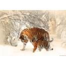 Φωτοταπετσαρία Τίγρεις - αγάπη