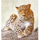φωτογραφία Ταπετσαρία τοίχου Leopard