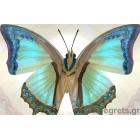 φωτογραφία Ταπετσαρία τοίχου Fluture