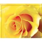 φωτογραφία Ταπετσαρία τοίχου τριαντάφυλλο gΛευκόen