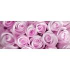 Φωτοταπετσαρία Μωβ τριαντάφυλλα Vlies
