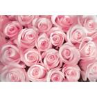 Φωτοταπετσαρία Ένα μπουκέτο από τριαντάφυλλα