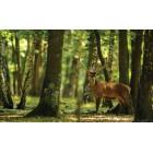 Φωτοταπετσαρία Ελάφι στο δάσος