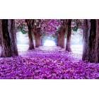 Φωτοταπετσαρία Μωβ μονοπάτι λουλουδιών 3D L 1
