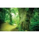Φωτοταπετσαρία Διαδρομή στο δάσος 3D