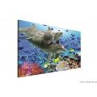 Εικόνα Canvas Δελφίνια