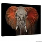 Εικόνα Canvas Η τέχνη του ελέφαντα
