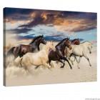 Εικόνα Canvas Άγρια άλογα