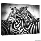 Εικόνα Canvas Ζέβρες μαύρο - άσπρο