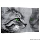 Εικόνα Canvas Γατάκι 1