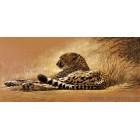 φωτογραφία Ταπετσαρία τοίχου Cheetah