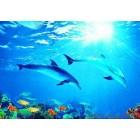 φωτογραφία Ταπετσαρία τοίχου delfin